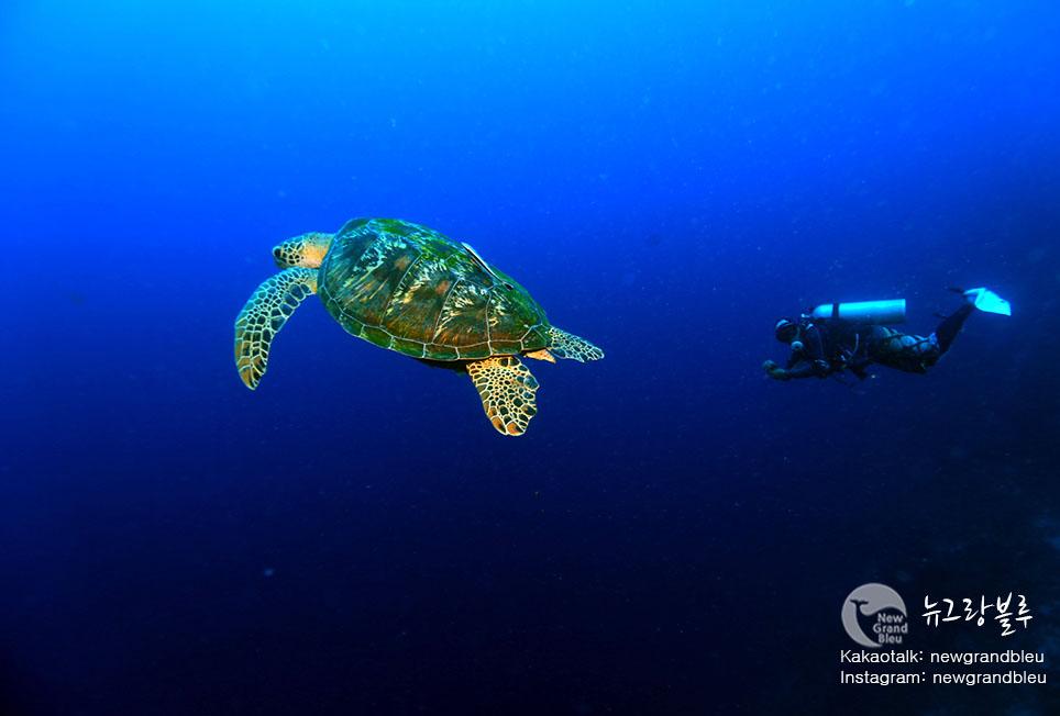 거북이3+다이빙.jpg