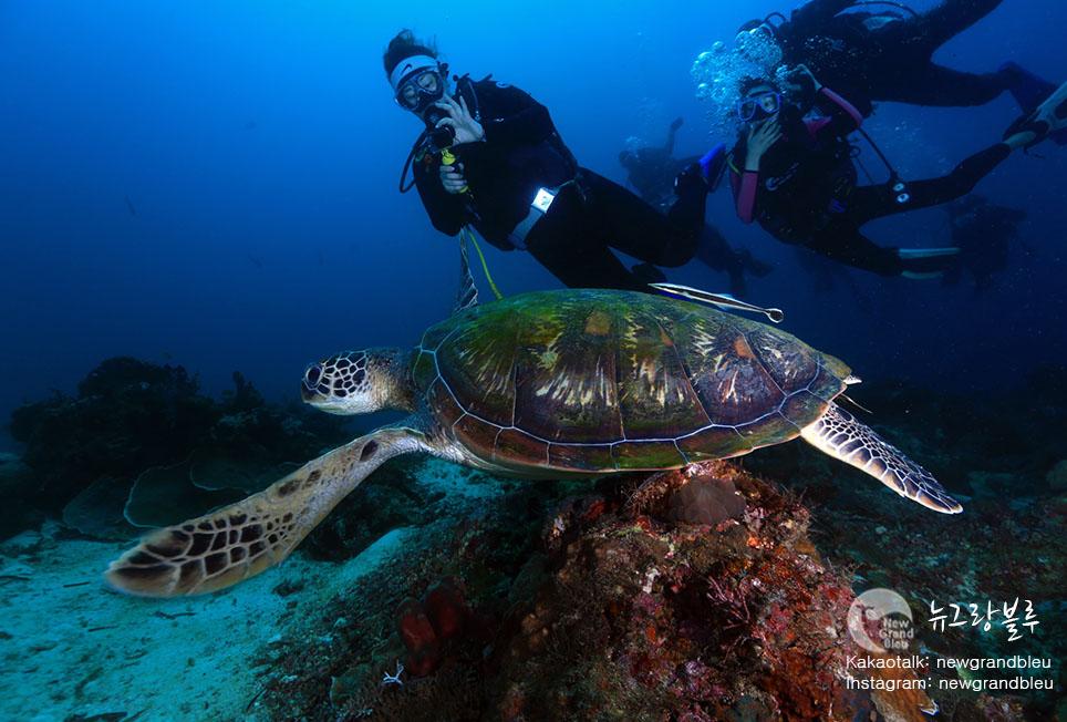 거북이5+다이빙.jpg